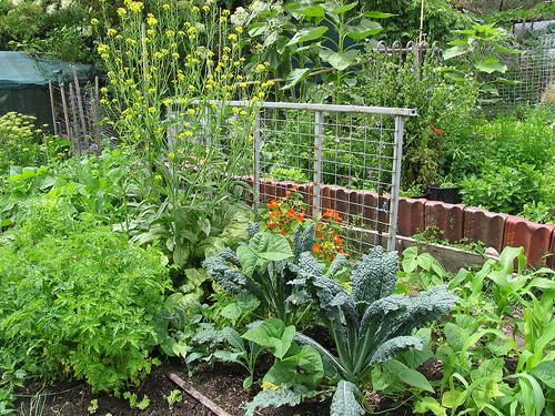 Permacultuur in de groententuin steeds in opbouw - Comment preparer des cornichon du jardin ...